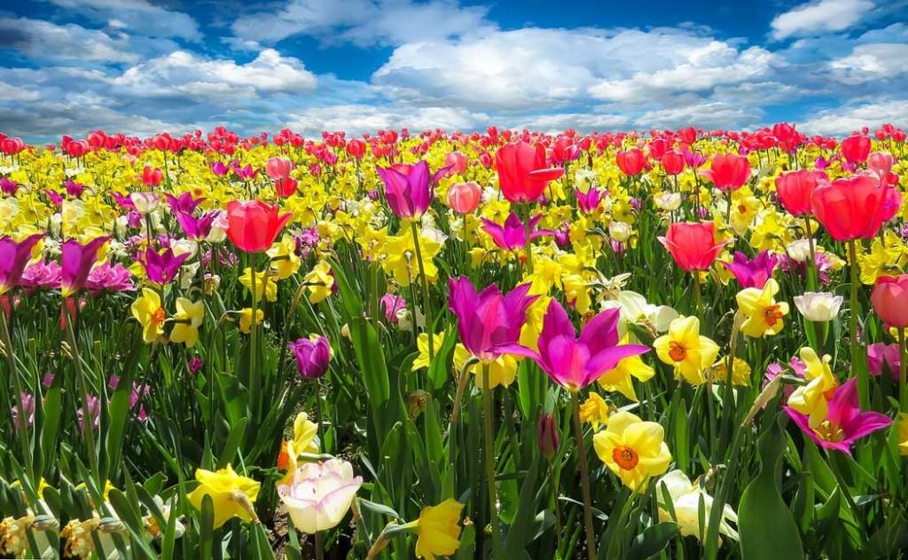 çiçeklerin-sistematiğini-kuran-adam