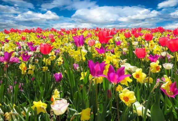 Çiçeklerin sistematiğini kuran adam