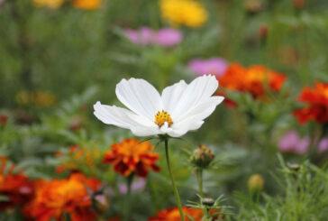 Çiçeklerin terapik gücü