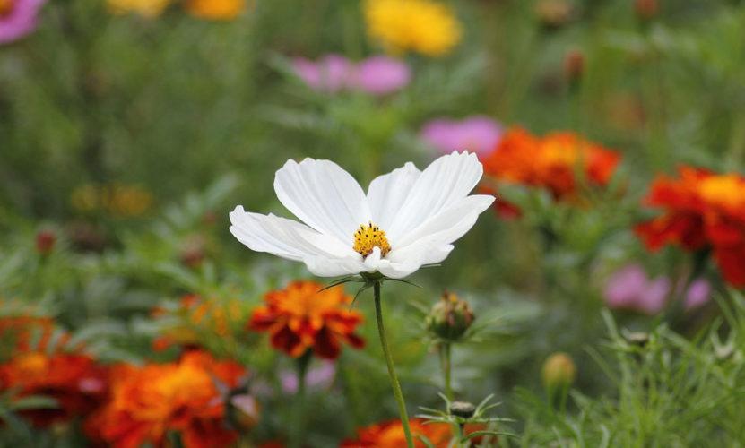 çiçeklerin-terapik-gücü