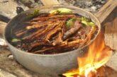 Ayauhasca Çayı. Peru ormanlarındaki gizemli bitki