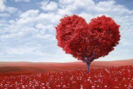 Aşk Geliyor