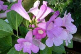 Aklı başında (farkındalıklı) çiçekler