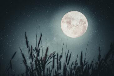 Ay Fazında Çiçekler Ve Ezoterik Takvim