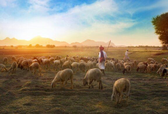 Koyun olmak mı? Çoban olmak mı?