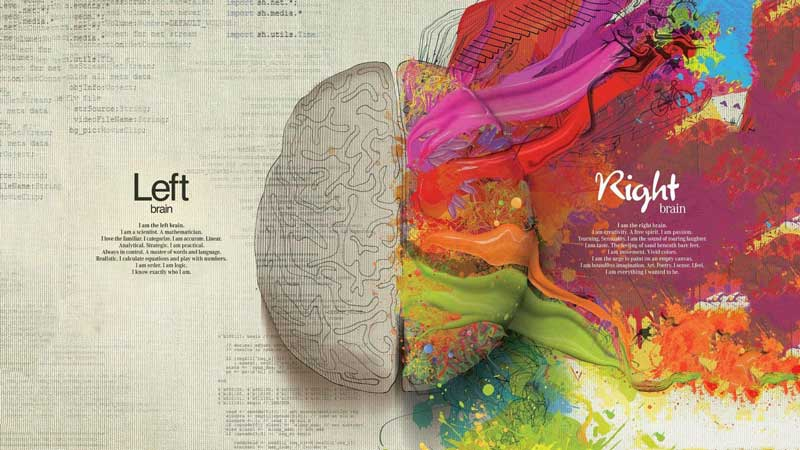 İnsan düşünen bir Beyindir