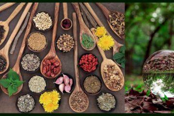 Doğal Yaşam Gücünün Kaynakları. Ruh Hali Ve Gıda İlişkisi