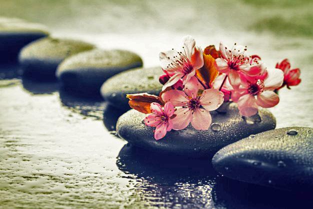 Ruhun Dönüştürücü Sözlerinde Çiçeklerin Mesajı