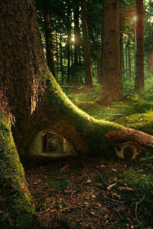 Orman Atmosferine Girmek