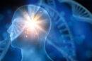 İnsan Beyni Ağlarında Yüksek Boyutlar