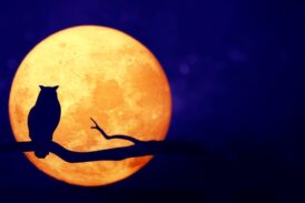 Ay düğümü