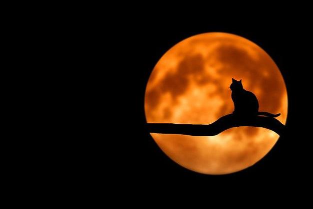 5 Haziran Ay Tutulması Ay Tutulurken Rüya Görmek
