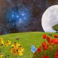 Bu ay tutulması için çiçeklerden öneriler