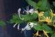 Yin çiçeklerinin soğutucu enerjisiyle tanışın