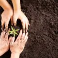 Tohumun şifası