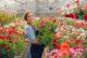 Yin ve Yang çiçeklerle iyileşme