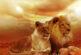 Aslan burcunda dolunay