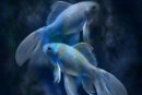 Güneş Balık Burcunda ''Mutlu Yıllar''