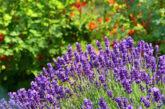 Çiçek terapi; sizi dinler