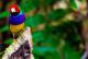 Papağanlara özgürlük