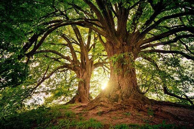 Bu Dünya Hepimizin Lütfen Doğaya Sahip Çıkalım