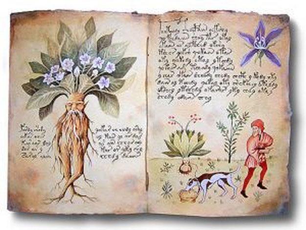 Büyülü Bitkilerin Gücü