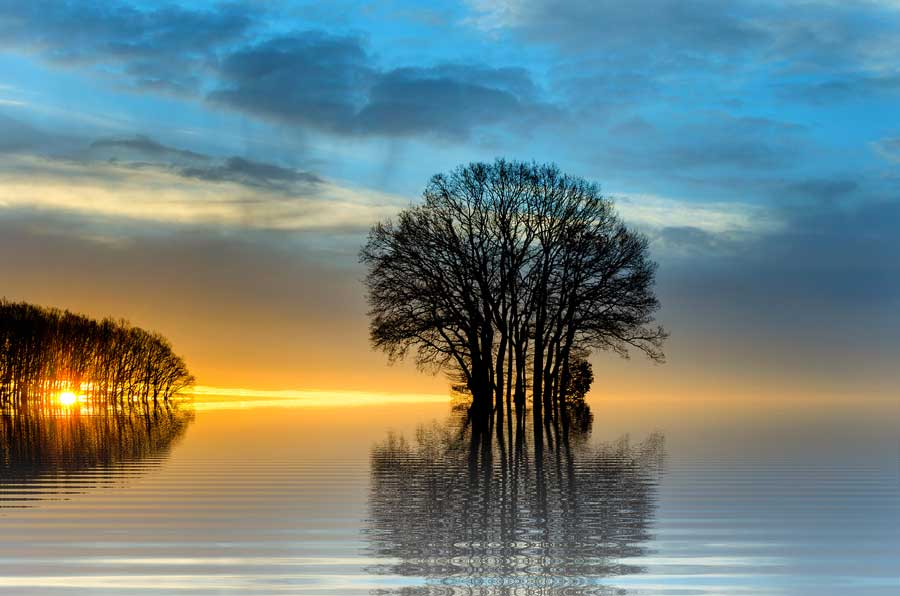 Gören bir göz bir ağaç yaprağından tüm yaratılışın kitabını okur