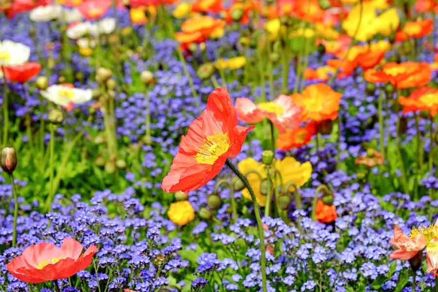 Meta Flora - Çiçek Sistemi ile Ritüelistik Çalışma yöntemi