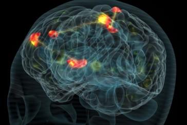 Beynin çalışmasını anlama