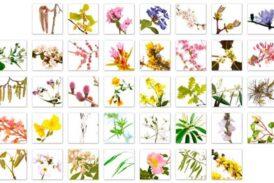 Çiçeklerin enerjisine uyumlanmak