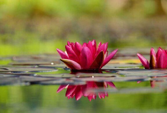 Derin gevşeme ve huzurun çiçekleri