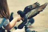 Kuşbakışı insanoğlu