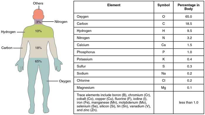 insan-vücudundaki-elementler