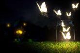 Ölmeden önce ölmek. Kelebekler ve Nevruz