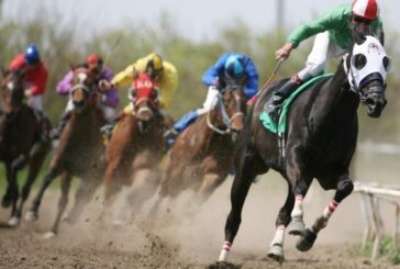 Atların bile motivasyonu vardır