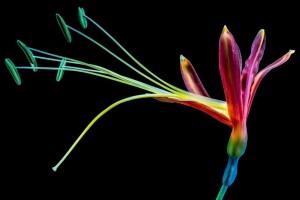 renkler-ve-çiçekler