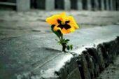 Tohum – Kendi potansiyelini fark etmek