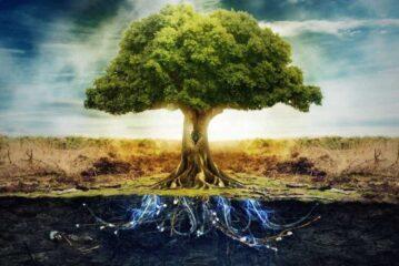 Tohum, yaşamın SIRrını taşıyor içinde
