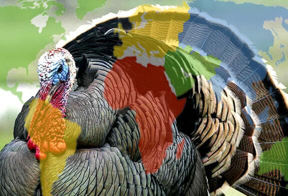 Sen beni Hindi zannet ama ben Türkiye'yim…