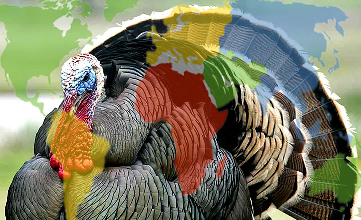 Sen beni Hindi zannet ama ben Türkiye'yim...